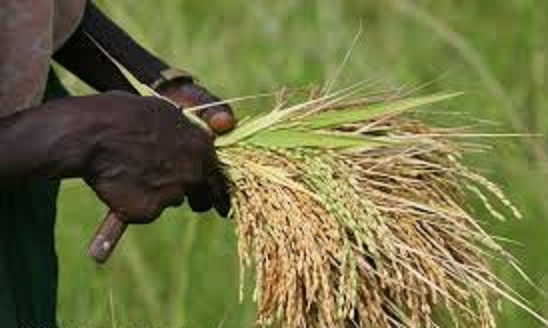 modernisation of agriculture The agriculture sector modernization project is financed by a $125m credit from the international development association of the world bank, with additional grant of €25m to be provided by the .