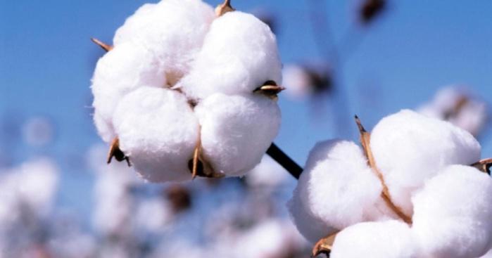 Vélingara : Nouvelles innovations à la Société de Développement et des fibres textiles.