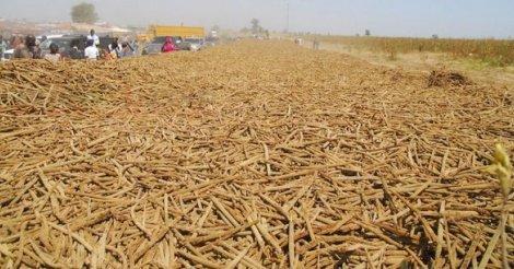 Sénégal : Khelcom ou le rêve d'un autre modèle d'exploitation agricole