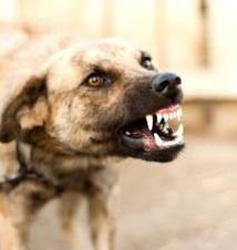 Gandigal : Mordue par un chien, elle meurt après avoir reçu une piqûre à l'hôpital de Mbour