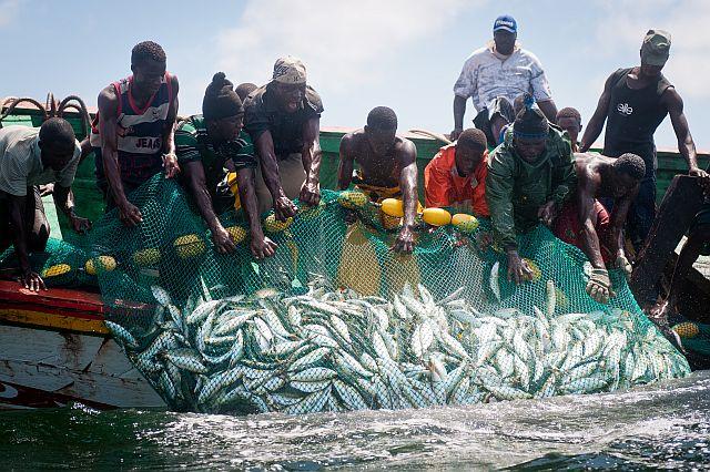 Saint-Louis : les 4 pêcheurs arrêtés, finalement libérés