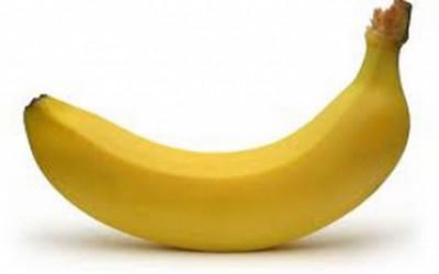 Oui, il existe 4 formes de pénis dans l'univers