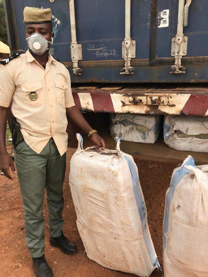 Vol et usage de chanvre: La bande à Cheikh Ndiaye interpellée à la cité Mixta