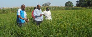 PNAR – La leçon du Pr Moussa Baldé, DG de la SODAGRI: « Le riz est possible partout… »