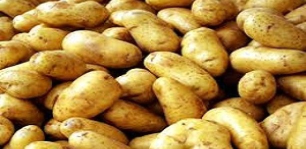 Pourquoi la pomme de terre est rare sur le marché