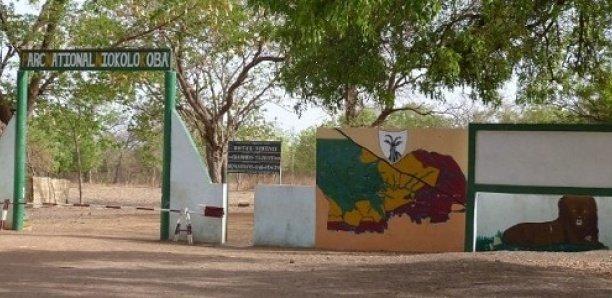 Trafic d'or à Niokolo Koba : Le procès renvoyé en audience spéciale au 21 juin
