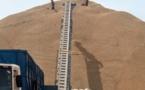 Campagne arachidière : une production de 250.000 tonnes attendue à Kaffrine