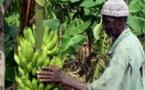 Investissements productifs au Sénégal : La diaspora sénégalaise veut jouer sa partition