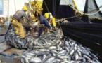 Pêche INN, non application des textes, disparition de pêcheurs : Greenpeace alerte le ministre Alioune Ndoye et recommande