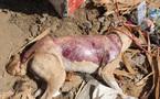 Kolda : la police arrête un individu en train de dépecer un chien