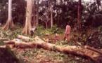 Djoloff: l'ampleur de la déforestation, décourage les populations de la localité