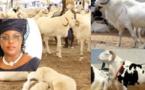 Tabaski: Marieme Faye Sall offre des moutons aux populations