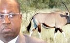 Affaire des gazelles oryx : Le Forum civil vilipende Abdou Karim SALL à l'Onu