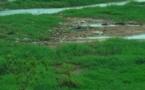 Le fleuve de Kolda, un « trésor économique », en voie de disparition