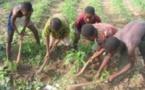Exploitation des enfants : 152 millions d'enfants travaillent dans le monde et plus de la moitié sont victimes d'esclavage et de prostitution