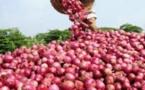 60 mille tonnes d'oignons en souffrance entre les communes de Pout, Ndiender et Keur Mousseu
