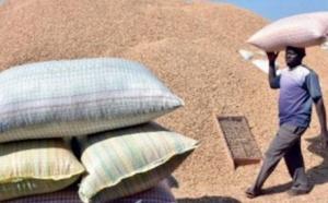 Campagne de commercialisation arachidiere: 3.670 tonnes déjà collectées par SONACOS Lydiane